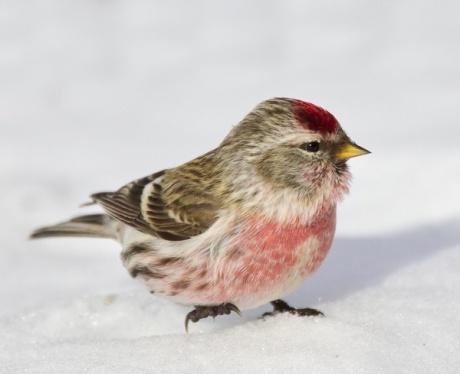 Mon Ami le Petit Oiseau